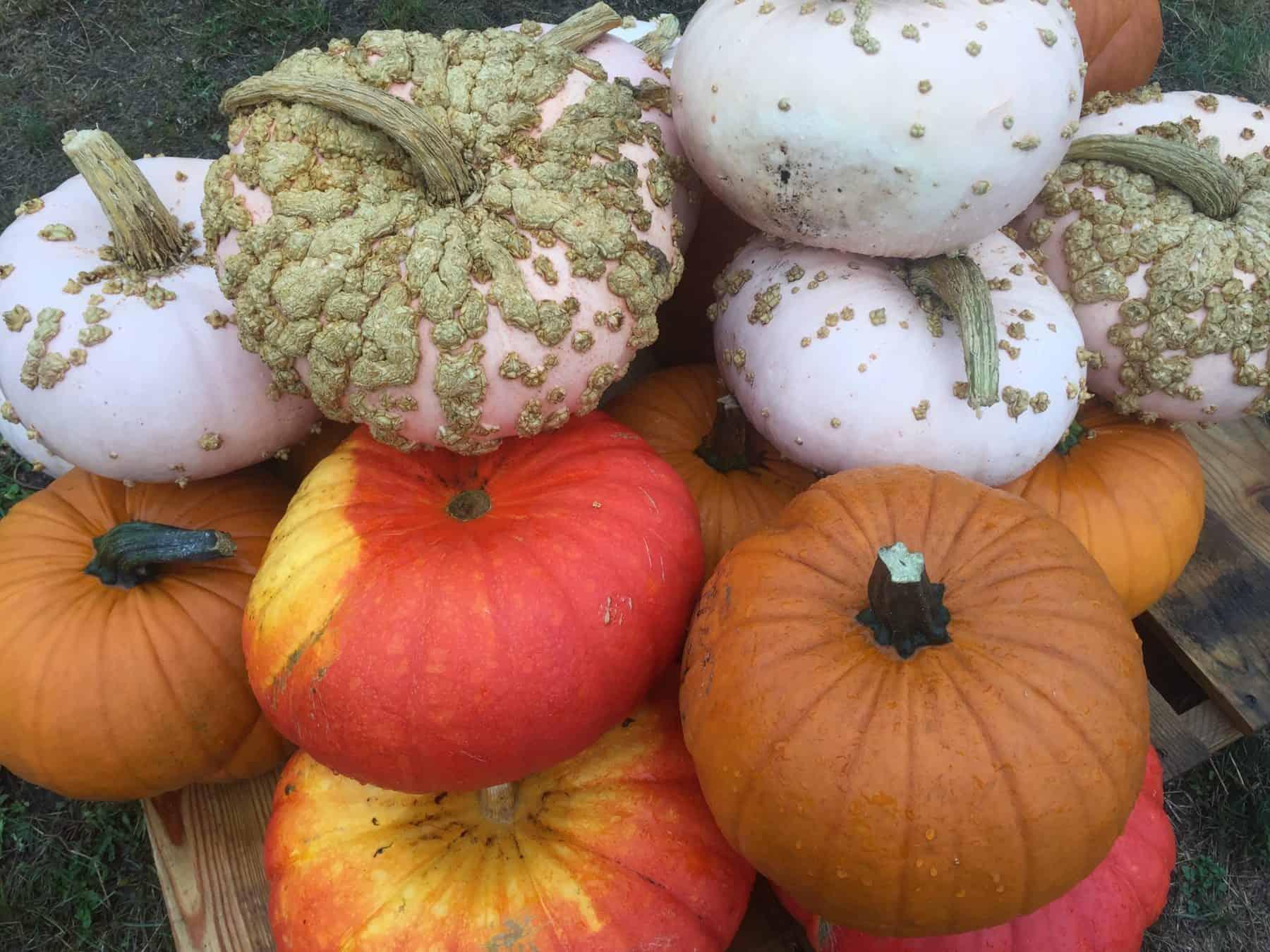Halloween Pumpkin Math!