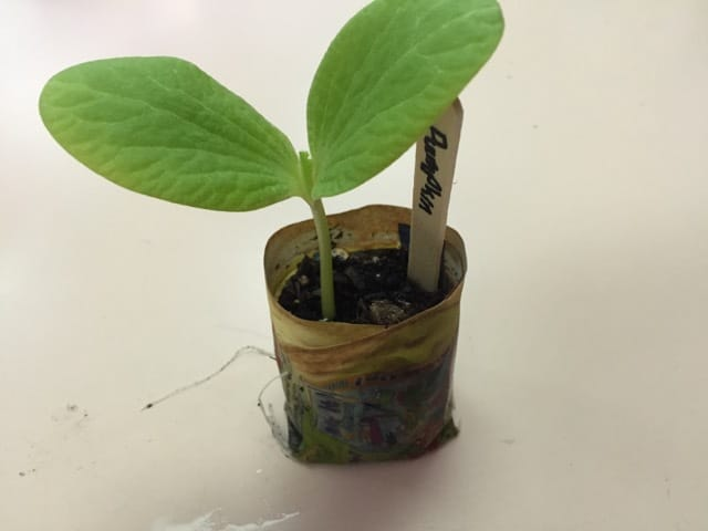 How to make a paper seed pot
