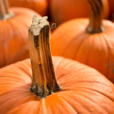How To Grow Pumpkins With Kids