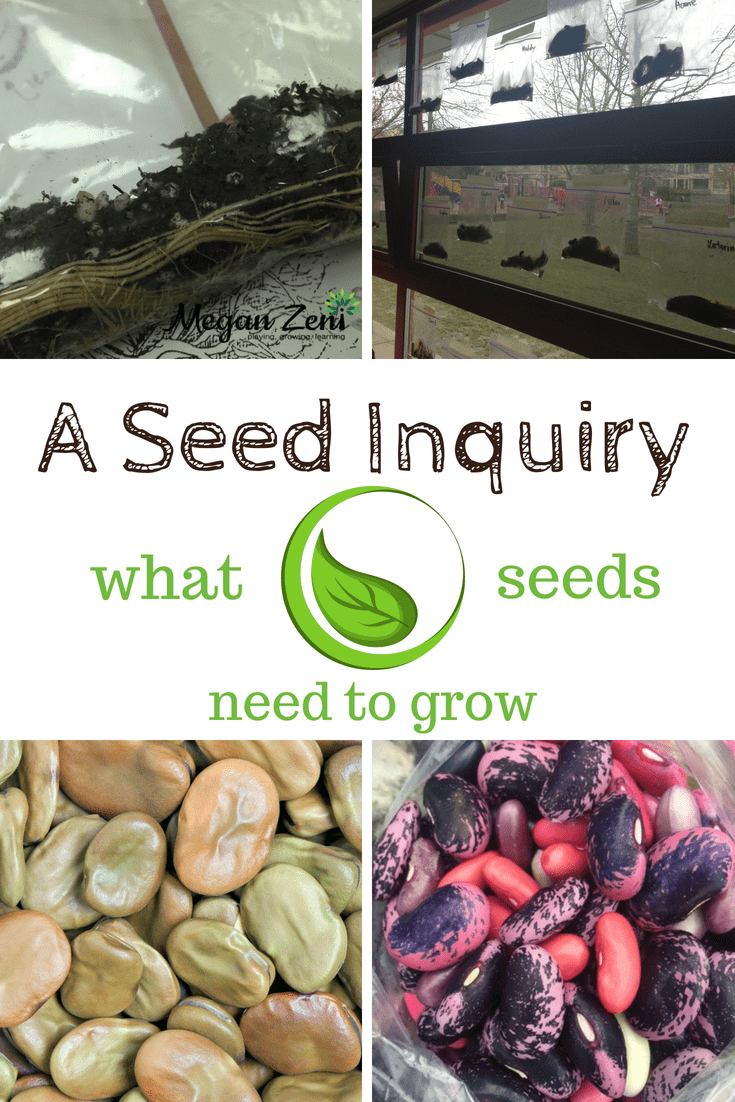 What do seeds need to grow? A seed inquiry.