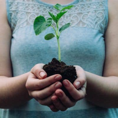 What Seeds Need To Grow: A Seed Inquiry