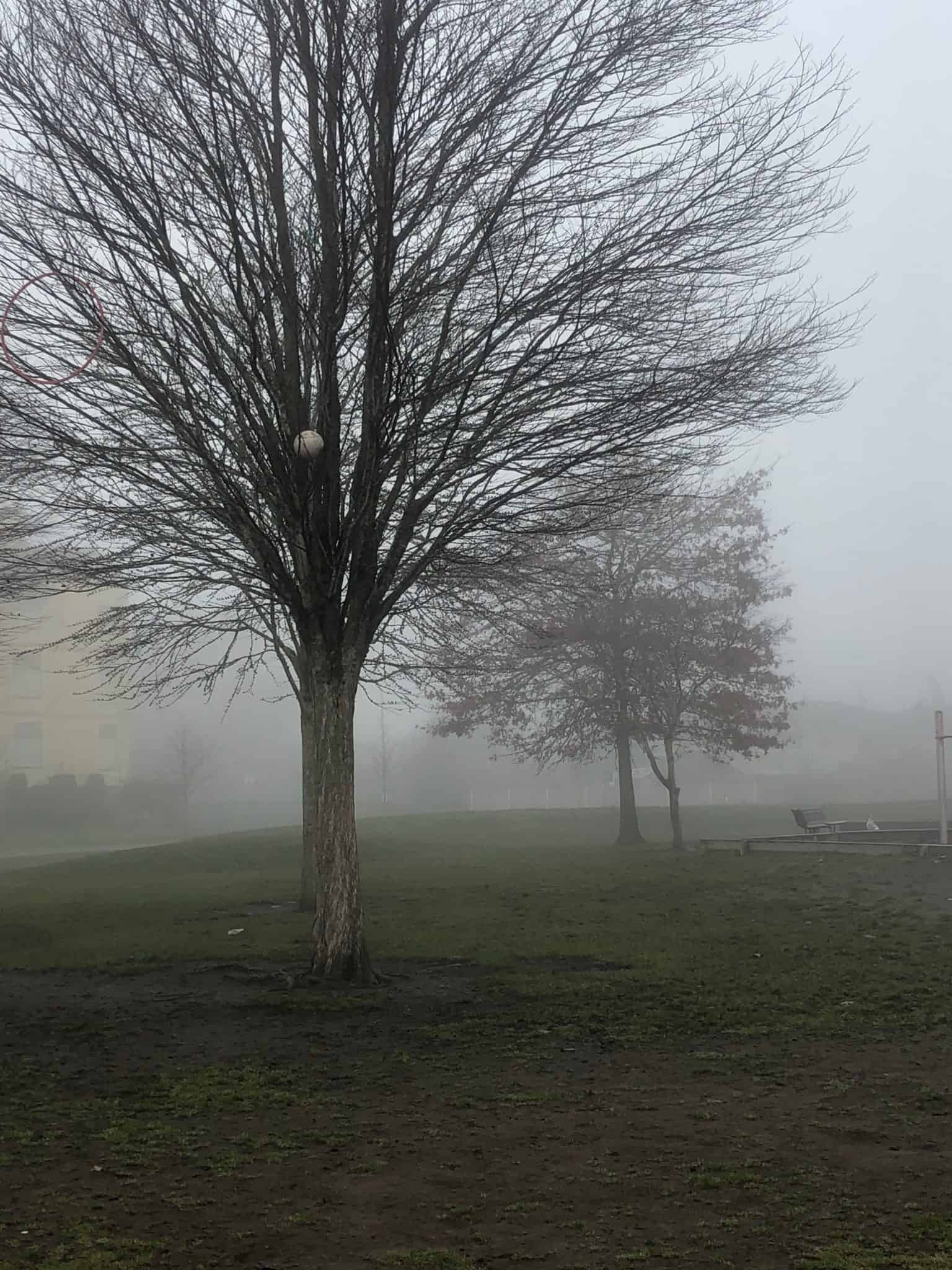 Risky Play Why Children Love It And >> Risky Play Getting Lost Found In The Fog Megan Zeni