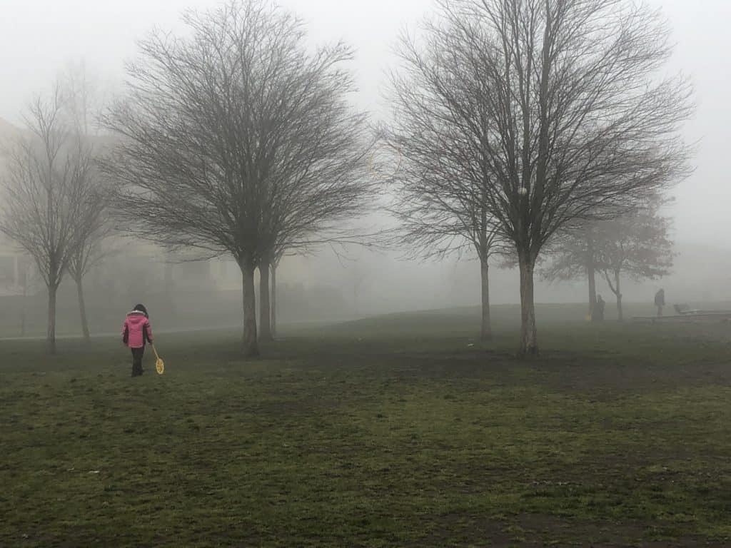 trundle wheel in fog