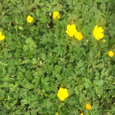 School Garden Weed Resources